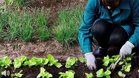 'La producción ecológica es la única eficaz para mitigar el cambio climático', Álvaro Barrera, Ecovalia