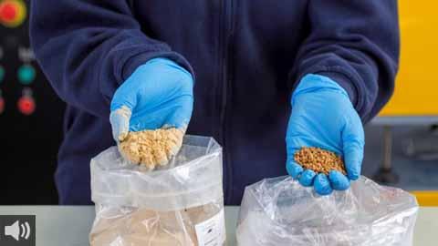 'Oliplast' es el plástico del futuro creado en Los Pedroches por la cooperativa olivarera Olipe de Pozoblanco con huesos de aceituna