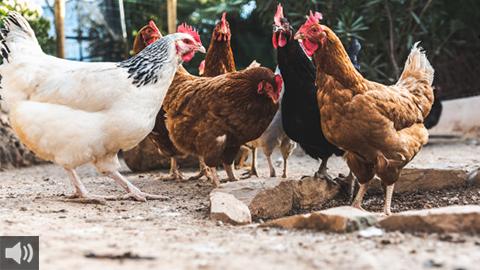 La ganadería ecológica lleva implícita la garantía de bienestar animal y de cuidado del medio ambiente