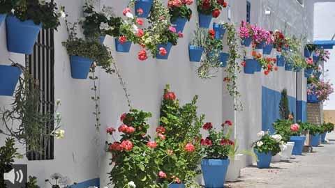 Cañete de las Torres presenta 'Calles en Flor', un festival floral de los vecinos de la localidad para engalanar sus calles