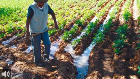 Agricultores de la zona norte de Granada rechazan la instalación de una planta fotovoltaica porque invade 700 hectáreas de terrenos agrícolas
