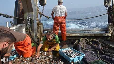 El sector pesquero de Motril se suma al paro general en protesta por la gestión del Gobierno central y la UE sobre la reducción de días de pesca y del nuevo reglamento de control