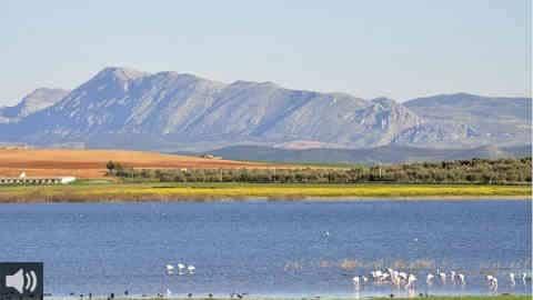 Campillos inaugura el Centro de Interpretación de la Reserva Natural Lagunas de Campillos y se consolida como destino de referencia para el turismo ornitológico