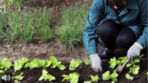 'Mundo Finito – No queremos vivir en Marte' nos acerca alternativas de producción de alimentos con funciones educativas para conseguir un consumo responsable