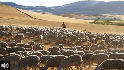 'Nuestros animales generan un cortafuegos natural y mantienen la masa forestal en buenas condiciones', Antonio Martínez, ganadero trashumante en Jaén