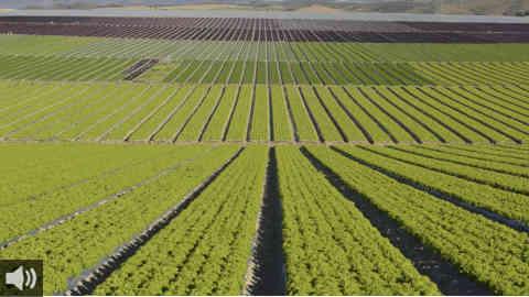 La falta de lluvias adelanta casi un mes la vendimia en el Marco de Jerez, en la provincia de Cádiz, aunque con mayor cosecha que la del año anterior