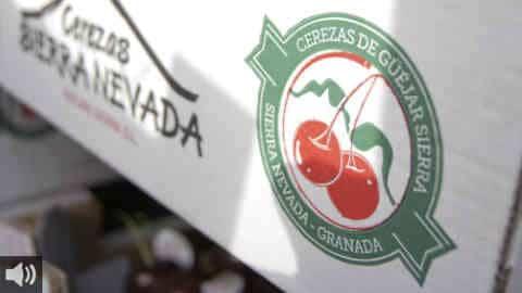 El municipio granadino de Güejar Sierra disfruta de la XI edición de las Jornadas Gastronómicas de la Cereza güejareña, poniendo en valor esta fruta veraniega