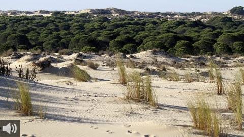WWF exige acciones a las administraciones tras advertir la Unesco de las graves amenazas de Doñana
