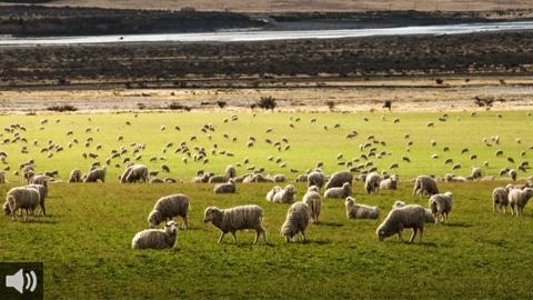 La ganadería extensiva y ecológica ayuda a mitigar el cambio climático y a mantener tierras de pastos que facilitan la eliminación de los gases de efecto invernadero