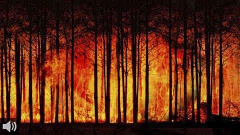 'La mejor forma de atacar el problema de los incendios es la prevención', Gustavo Colmena, técnico en Restauración Forestal de WWF