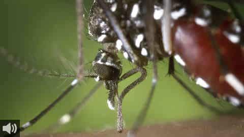 'Desde mediados de julio se estaban detectando un número abundante de especímenes de los que transmiten el virus del Nilo', Jordi Figuerola investigador de la Estación Biológica de Doñana