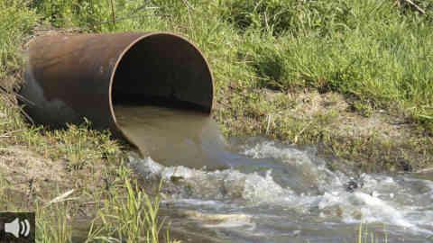 La Fundación Savia denuncia el vertido de aguas fecales en el espacio natural protegido de Isla Cristina, en Huelva