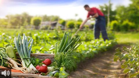 Celebramos el Día Mundial de la Agricultura indagando en las cuestiones a las que se enfrenta este sector y reconociendo el trabajo de quienes cultivan la tierra