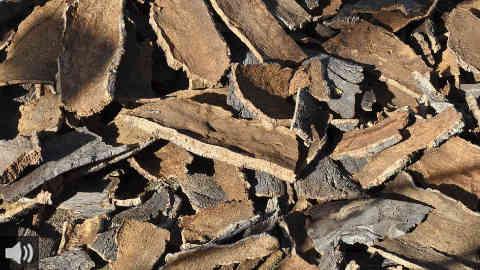 La producción de corcho de la Serranía de Ronda cierra la temporada con una bajada de precios del 15% como consecuencia de una primavera muy seca y un verano con temperaturas elevadas