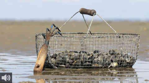 El Tribunal General de la Unión Europea anula los acuerdos pesqueros y de aranceles con Marruecos por incluir productos del Sáhara Occidental