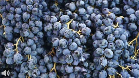 Los ayuntamientos y los vitivinicultores piden celeridad en la creación del órgano que trabaja y vela por la puesta en valor de la uva moscatel como Patrimonio Agrícola Mundial por la FAO en 2018