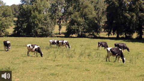 COAG Andalucía insiste en que la ganadería extensiva es clave para impedir desastres como el de Sierra Bermeja