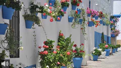 Los Patios de Otoño en Córdoba celebran este año la conmemoración del Centenario de los Patios en el puente festivo local de San Rafael