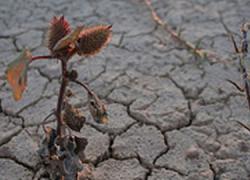 COAG Andalucía considera escasas las ayudas para paliar la sequía