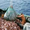 Oceana impulsa la campaña 'Ni un pez por la borda' contra los descartes en la pesca