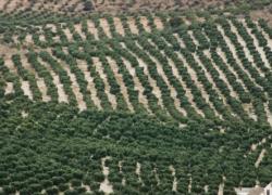 La Unión Europea aprueba el almacenamiento privado de aceite de oliva