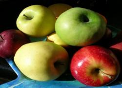 La Junta se compromete a ampliar el trabajo de los 'comedores saludables' para fomentar buenos hábitos