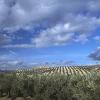 ASAJA denuncia que el sector primario andaluz está produciendo por debajo de costes