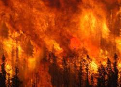 Un incendio declarado en la Costa del Sol obliga a desalojar a 5 mil vecinos y vecinas de la zona