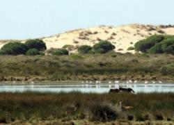 Organizaciones ecologistas piden al Gobierno andaluz mayor protección contra los incendios en Doñana