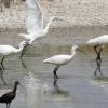 Conocer para conservar, el lema de SEO Birdlife para la celebración del Mundial de las Aves este fin de semana