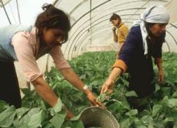 Andalucía conmemora el Día Internacional de la Mujer Rural para recordar a las más de 2 millones de mujeres que viven en el entorno