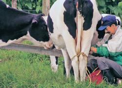 El sector primario acoge con alivio la decisión de la Consejería de Agricultura de anticipar el 50 por ciento de las ayudas al régimen del pago único de la Política Agraria Común