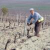 La sequía provocada por el cambio climático disminuye de forma alarmante el abastecimiento de agua para los agricultores de Doñana