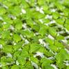 Comienza la Semana de la Producción y del Consumo Ecológico en la Alpujarra granadina