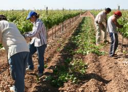 Miles de agricultores y ganaderos se movilizan frente a los recortes y para exigir a la Unión Europea una reforma de la PAC que vele por la sostenibilidad de las explotaciones agrarias