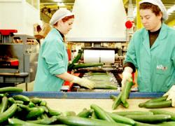 Los sindicatos dejan en suspenso la huelga en el sector del manipulado de frutas y hortalizas de Almería tras alcanzar un acuerdo con la patronal