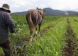 Los campesinos de la región argentina de Santiago del Estero se movilizan para frenar los desalojos de sus tierras y el anteproyecto de Ley de Semillas