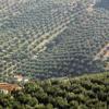 El Consejo Económico y Social de Jaén demanda un plan de empleo especial y la eliminación de las 35 peonadas para acceder al subsidio agrario ante las malas previsiones de la cosecha de aceituna