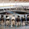 La Consejería de Agricultura, Pesca y Medio Ambiente continúa el diálogo con el sector lácteo y las asociaciones de consumidores para solucionar la caída de los precios de venta