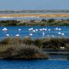 Ecologistas en Acción considera una amenaza el proyecto de gaseoducto para el espacio natural de Doñana y asegura que acudirá a instancias europeas