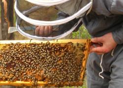 COAG Andalucía augura una mala campaña apícola ya que la persistencia de precipitaciones ha impedido que las abejas pudieran salir a alimentarse