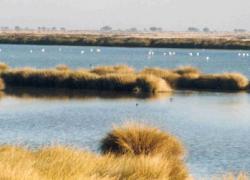 El parque nacional de Doñana puede perder su declaración de Patrimonio de la Humanidad concedido por la Unesco hace casi 20 años