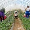 El Ayuntamiento de la localidad onubense de Moguer aprueba en pleno una moción de apoyo al sector agrícola local