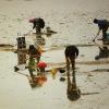 Autorizan de nuevo el marisqueo en la zona onubense de Punta Umbría, Mazagón, Matalascañas y Doñana tras 15 días de cierre de todo el caladero