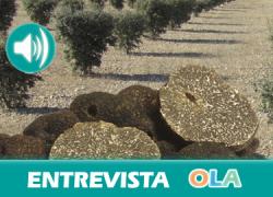 «En Córdoba no se conocía la Trufa de verano hasta que nosotros la dimos a conocer hace seis o siete años» Elena Pulido, bióloga y gerente de Viveros el Origen de la Trufa