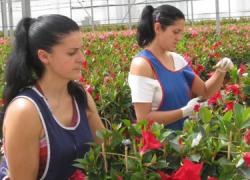 La provincia de Almería incrementa un 50% sus ventas en el sector de la floricultura y se convierte en la cuarta provincia más exportadora del país