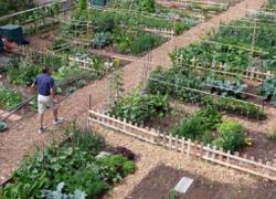 El Ayuntamiento de la localidad gaditana de Trebujena pondrá a cabo un programa de Huertos Sociales Ecológicos junto a la Asociación de Mujeres Doña Palomares Oliveros