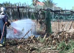 Sofocado el incendio que se detectó ayer en una finca en la Hijuela del Tío Caro en la localidad gaditana de Chipiona