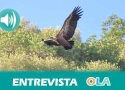 «Los buitres leonados reconquistan la Sierra Sur de la provincia de Sevilla», José Manuel Cedeño, de la Plataforma Ciudadana Sierra de Morón