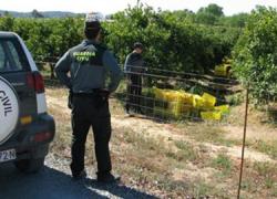 La zona cordobesa del Guadaljoz-Campiña registra un descenso del 25% de robos agrícolas con respecto a la campaña anterior